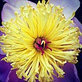 Flickr - USCapitol - Friday is National Public Gardens Day. Celebrate by viewing flowers like this at US Botanic Garden..jpg