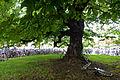 Flickr - ggallice - Bicycle tree.jpg