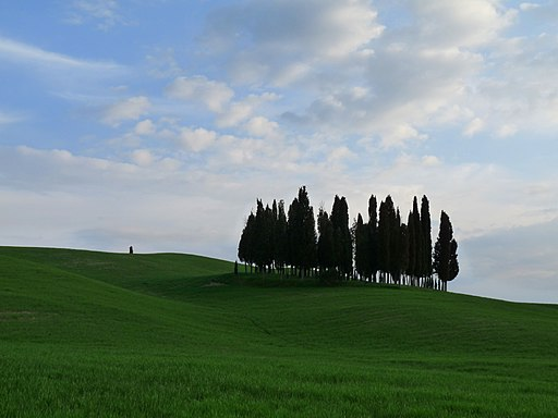 Cypress trees betwen San Quirico d'Orcia and Montalcino