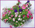 Flickr - ronsaunders47 - Bloomin' heck 2.jpg