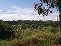 Flor de Paineira(Ceiba speciosa) e ao fundo o Hospital de Clinicas-USP - Rodovia Mário Donegá - SP-291 - panoramio.jpg