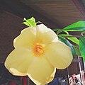 Flora Jogja 03.jpg