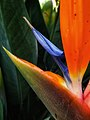 Floral photography - Photo by Giovanni Ussi 46.jpg