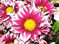 Flores 046.jpg