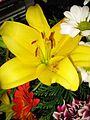 Flores 051.jpg