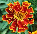 Flowers (175).jpg