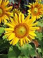 Flowers (212).jpg