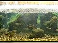 Fluviário de Mora - Aquário 3.JPG
