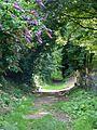 Footpath, East Chisenbury - geograph.org.uk - 1427242.jpg