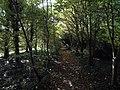 Footpath through the woods - geograph.org.uk - 998948.jpg