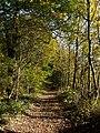 Footpath to Silkstone Wagonway - geograph.org.uk - 600811.jpg