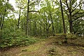 Forêt Départementale de Méridon à Chevreuse le 29 septembre 2017 - 10.jpg