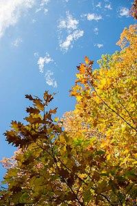Forêt de Rambouillet — automne 2018 (5).jpg