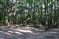 Forêt domaniale de Bois-d'Arcy 67.jpg