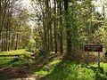 Forêt domaniale de Cinglais.JPG