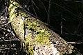 Forest Creep (3514353314).jpg