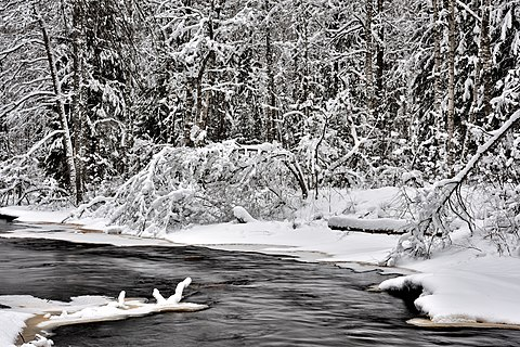 The banks of the forest river Roshinka after a heavy snowfall