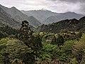Forest covered hills on Yakushima.jpg