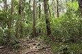 Forest in Mt.Gozen (Ibaraki) 02.jpg