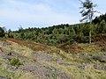Forest near Mallards Pike - October 2012 - panoramio.jpg