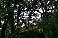 Forest on the Shivapuri peak track, Nepal, 18 May 2019 - 3.jpg