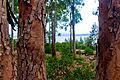 Foret lac obeira elkala algerie.jpg