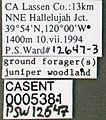 Formica manni casent0005381 label 1.jpg