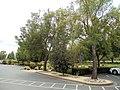 Franciscan Winery, St. Helena, California, USA (6696851059).jpg