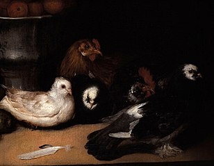 Pigeons and Fowls
