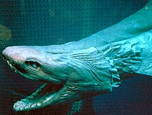 The head of a preserved shark, with the large mouth open