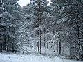 From Bernati - panoramio.jpg
