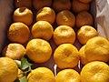 Fruits os Mediterranean mandarin .jpg