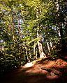 Gërmia Park run path - Shteg vrapi në Parku i Gërmisë.jpg