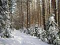 G. Zlatoust, Chelyabinskaya oblast', Russia - panoramio (17).jpg