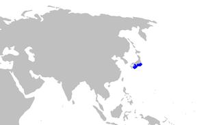 Broadfin sawtail catshark species of fish