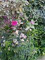 Gardens 10.jpg