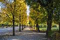 Gardens in Schönbrunn (3).jpg