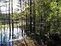 Garkalnes novads, Latvia - panoramio (14).jpg