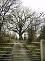 Gate and Tree - geograph.org.uk - 120361.jpg