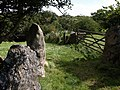 Gateposts near Cranbrook - geograph.org.uk - 1478442.jpg
