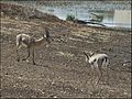 Gazelle-Valley-121.jpg