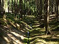 Gelobtbachtal, údolí Klopotského potoka - panoramio (6).jpg