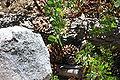 GeoCache hidden Under Pine Cones.jpg