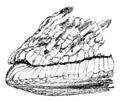 Geomalacus maculosus 6.png
