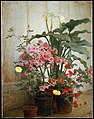George Cochran Lambdin - Side of a Greenhouse (15622859305).jpg