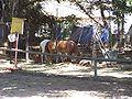 Ghi, pettingzoo (ponies)2.jpg