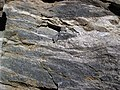 Gneiss (Precambrian; Rt. 93 roadcut next to the New River, Mouth of Wilson, Virginia, USA) 6 (30710267196).jpg