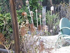 Grandma Prisbrey's Bottle Village - Image: Grandma Prisbrey's Bottle Village (Doll Heads)