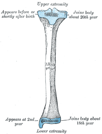 Gerdy's tubercle - Gerdy's tubercle is located on the lateral condyle of the tibia