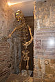 Great Cave Bear (Barcelona).jpg